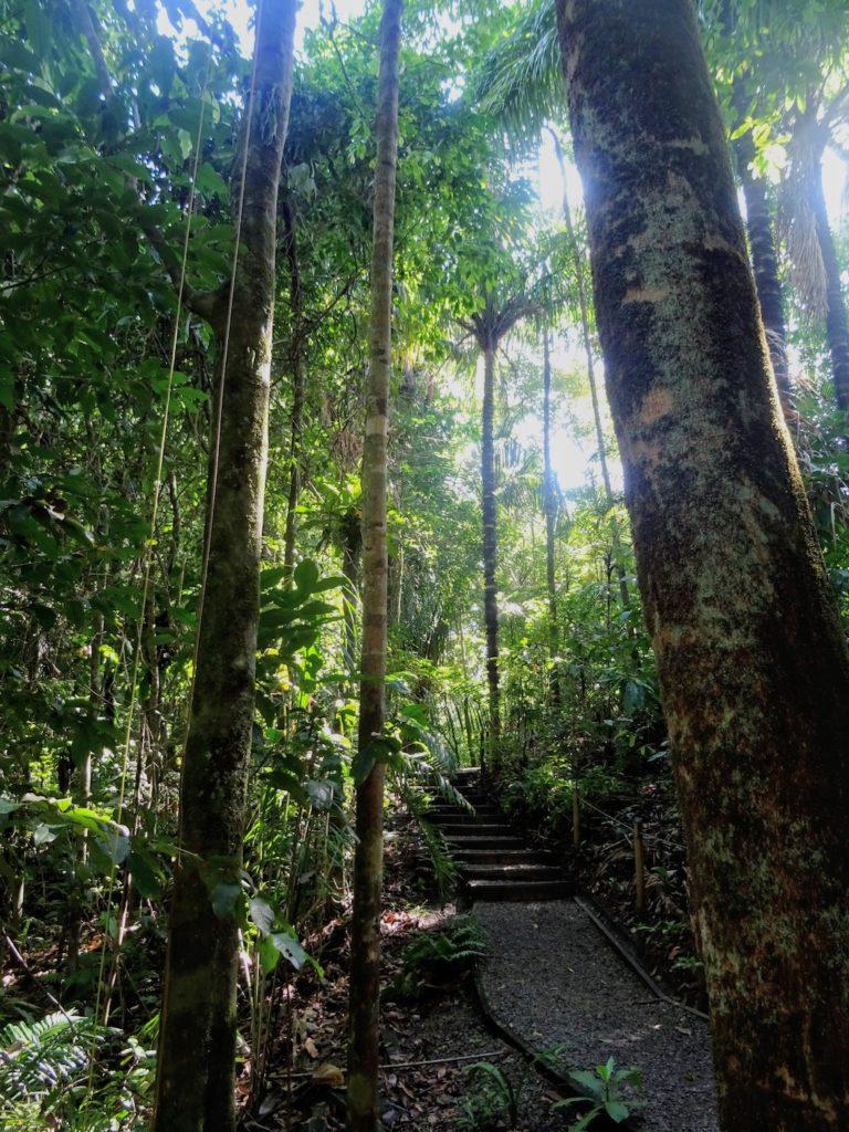 Costa Rica Manuel Antonio National park land11