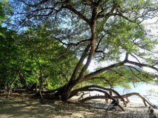 Costa Rica Manuel Antonio National park land9
