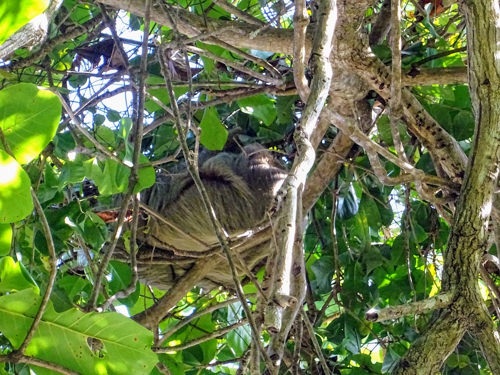 Costa Rica Manuel Antonio National park sloth