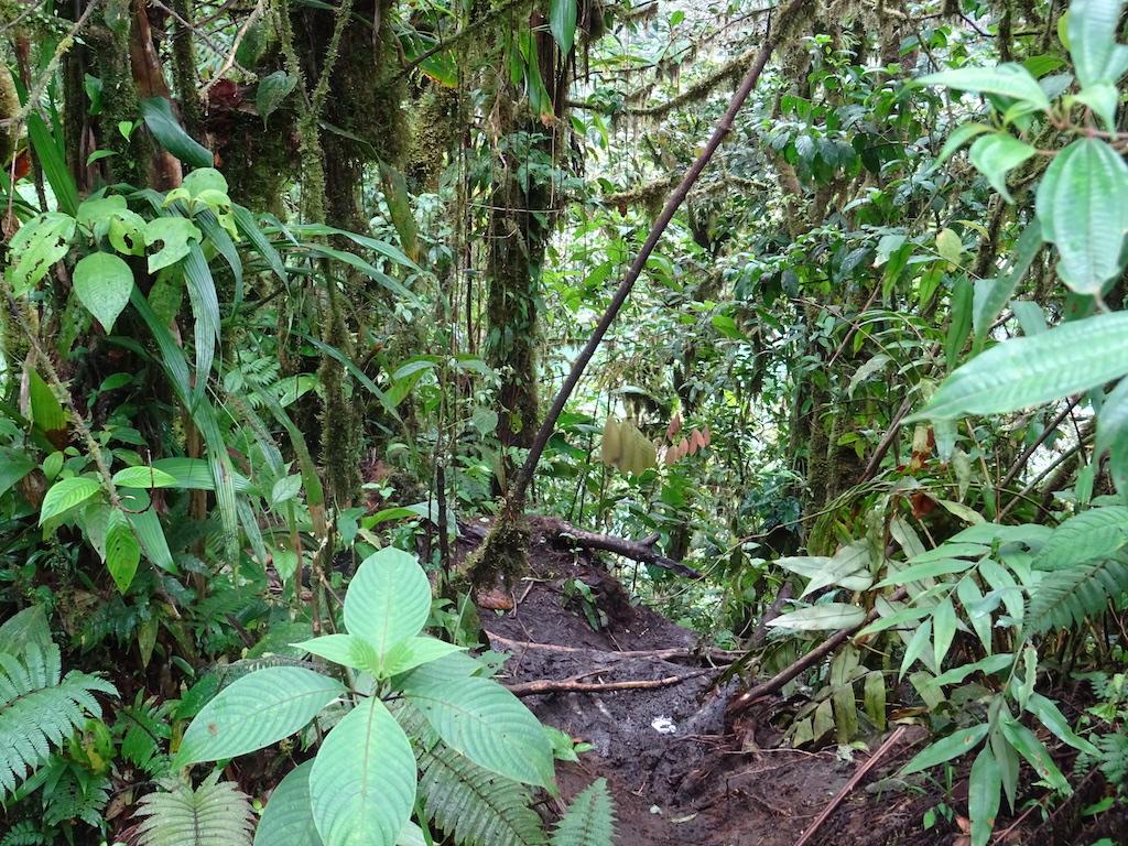 Costa Rica Arenal Cerro Chato trail down 0