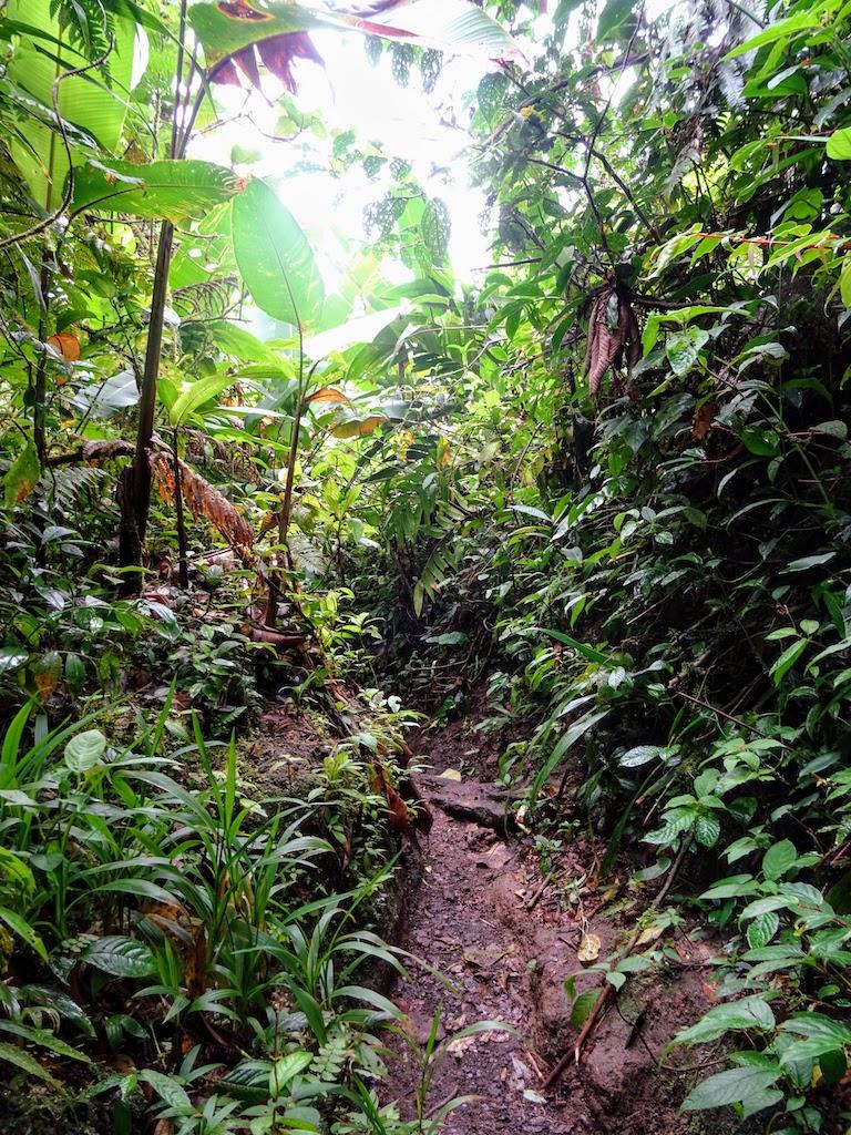 Costa Rica Arenal Cerro Chato trail down 4