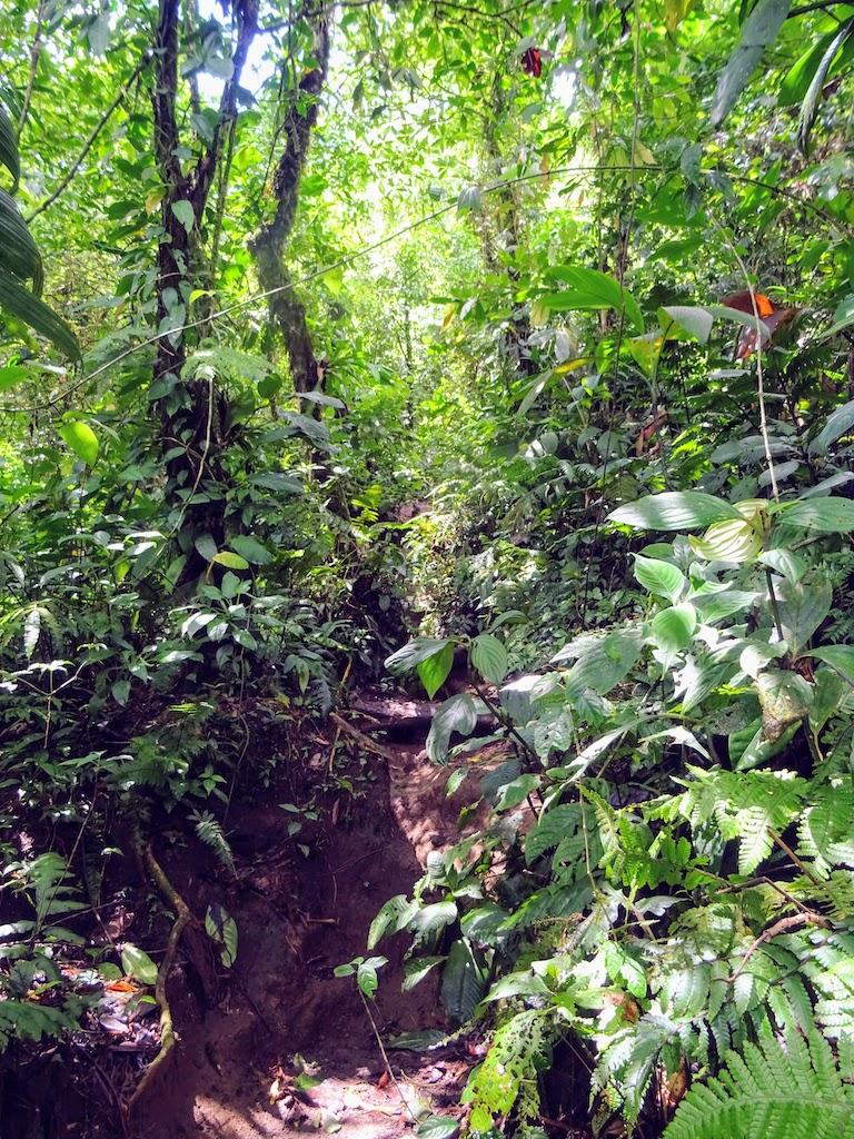 Costa Rica Arenal Cerro Chato trail up 8