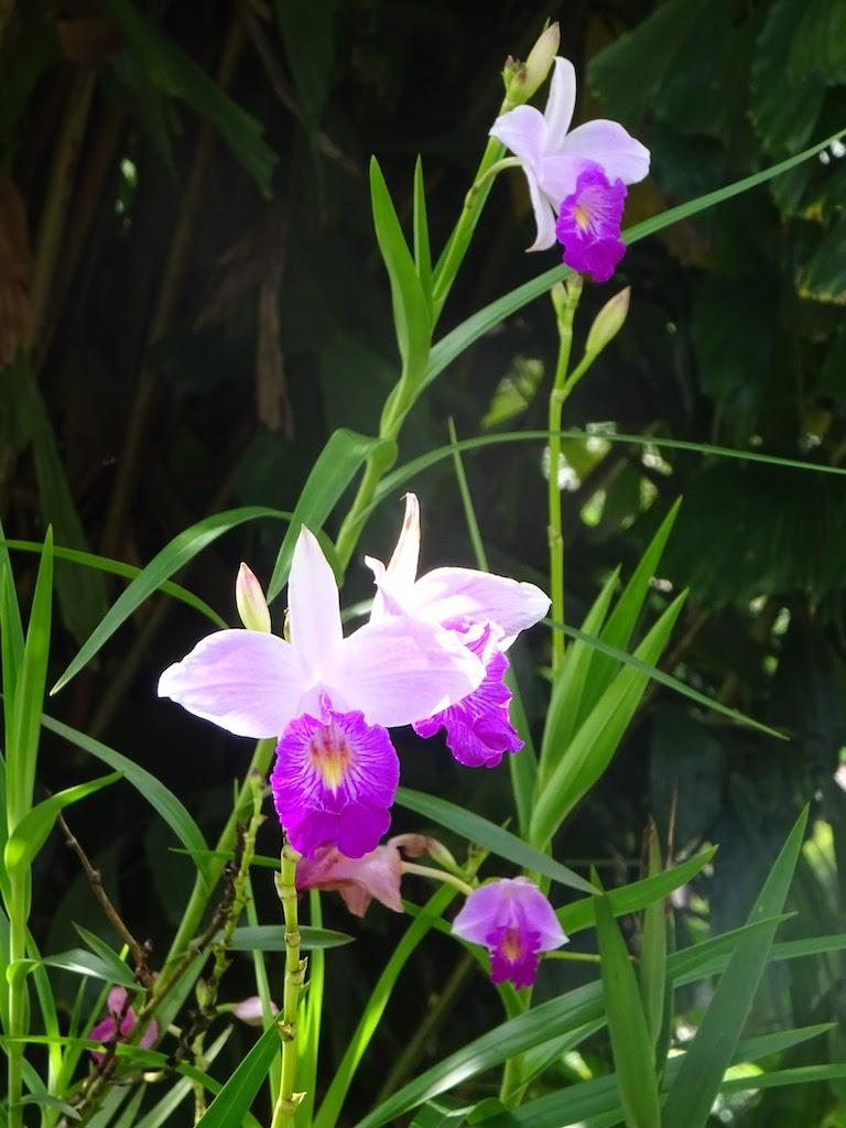 Costa Rica Arenal La Fortuna flower 1