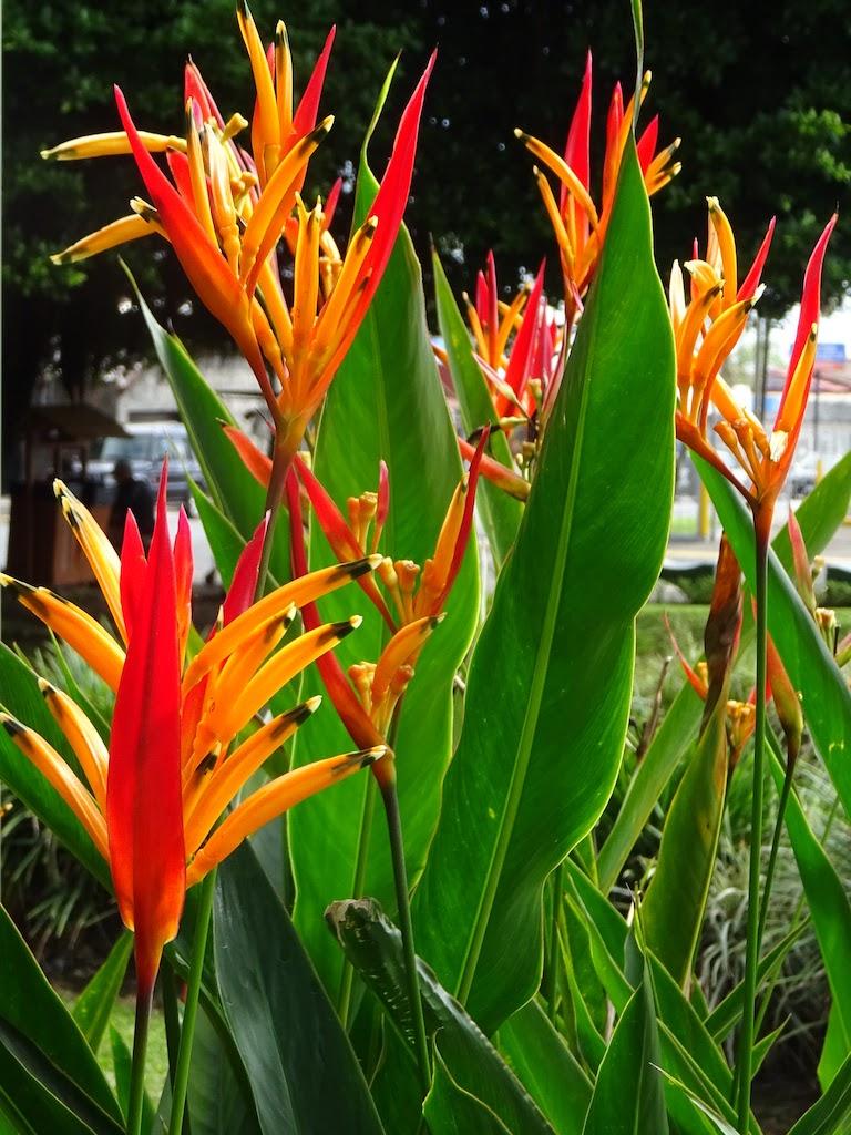 Costa Rica Arenal La Fortuna flower 2