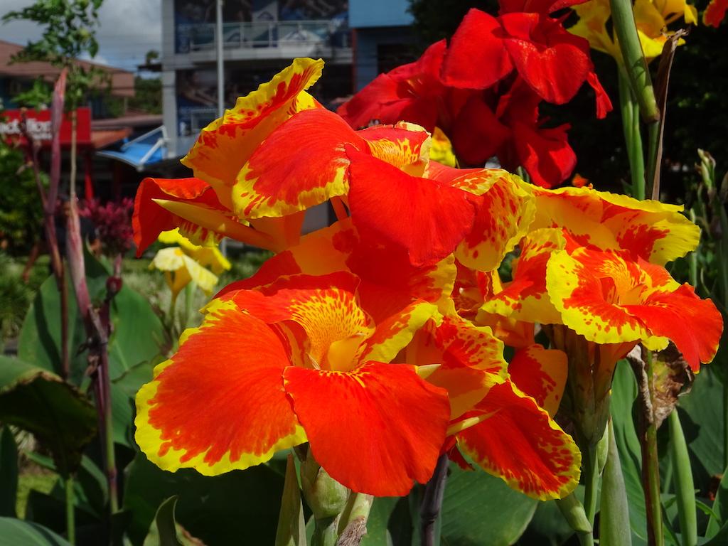 Costa Rica Arenal La Fortuna flower 3