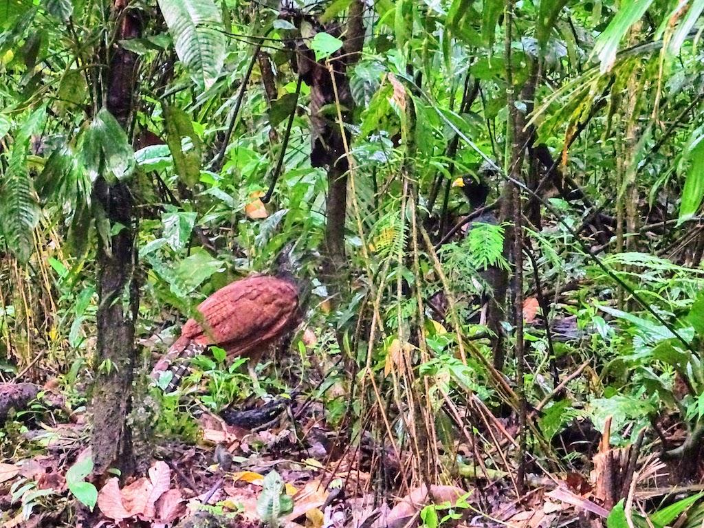 Costa Rica Arenal national park bird 2