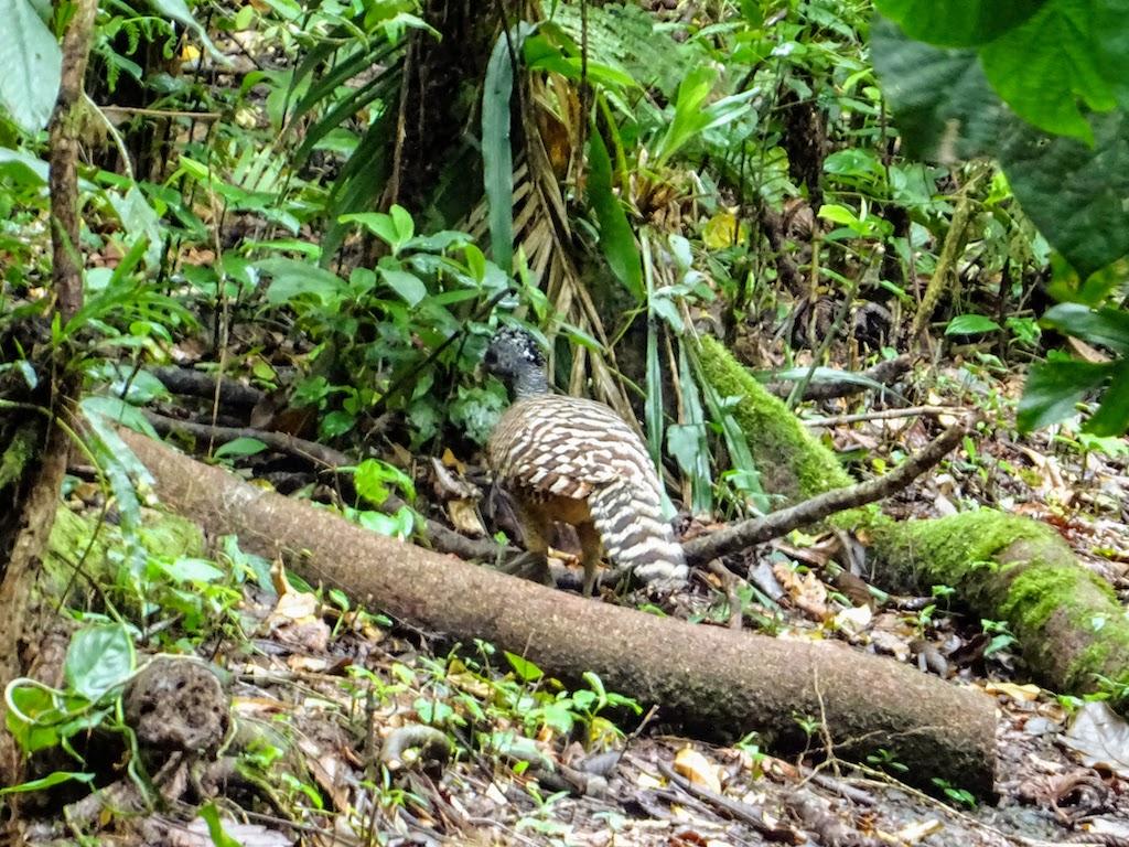 Costa Rica Arenal national park bird 3