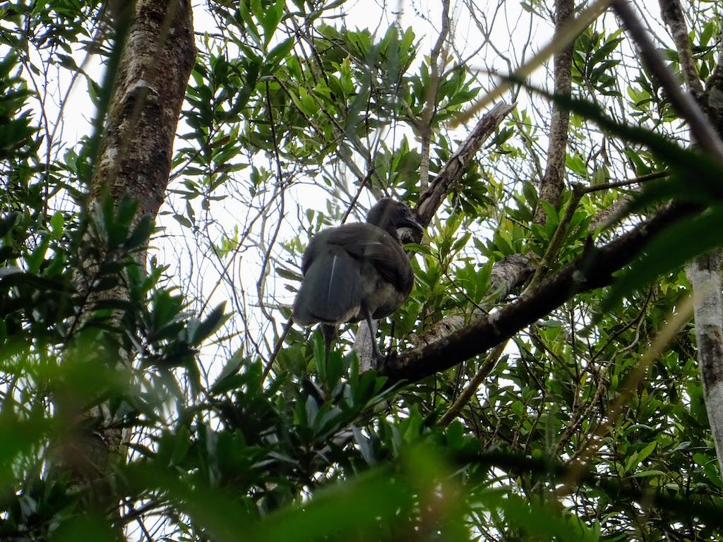 Costa Rica Arenal national park bird 4