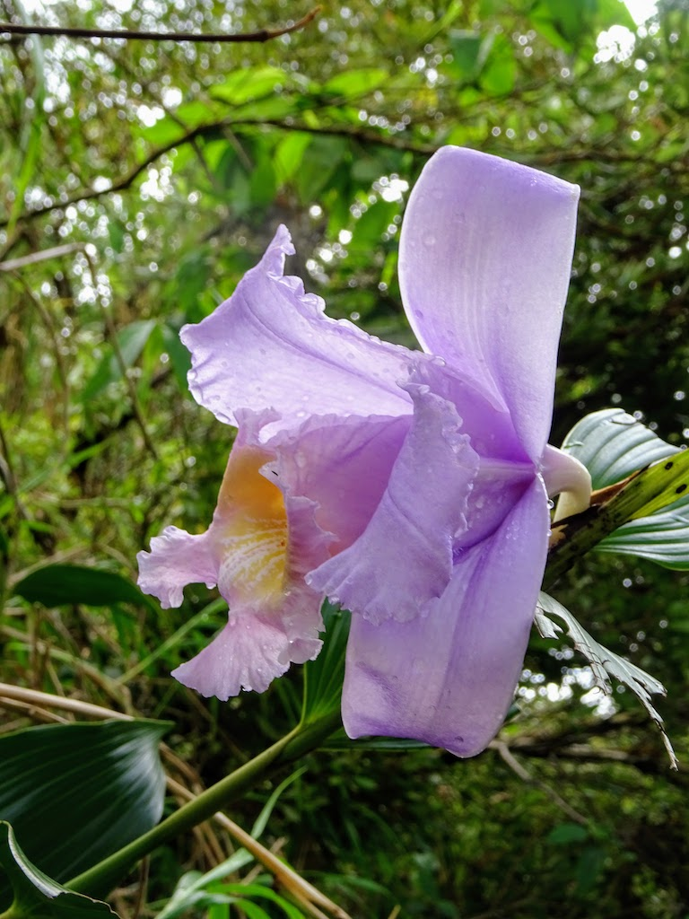 Costa Rica Arenal national park flower 1