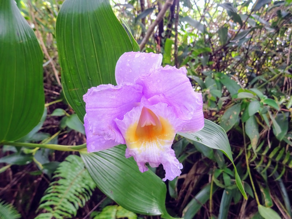 Costa Rica Arenal national park flower 2