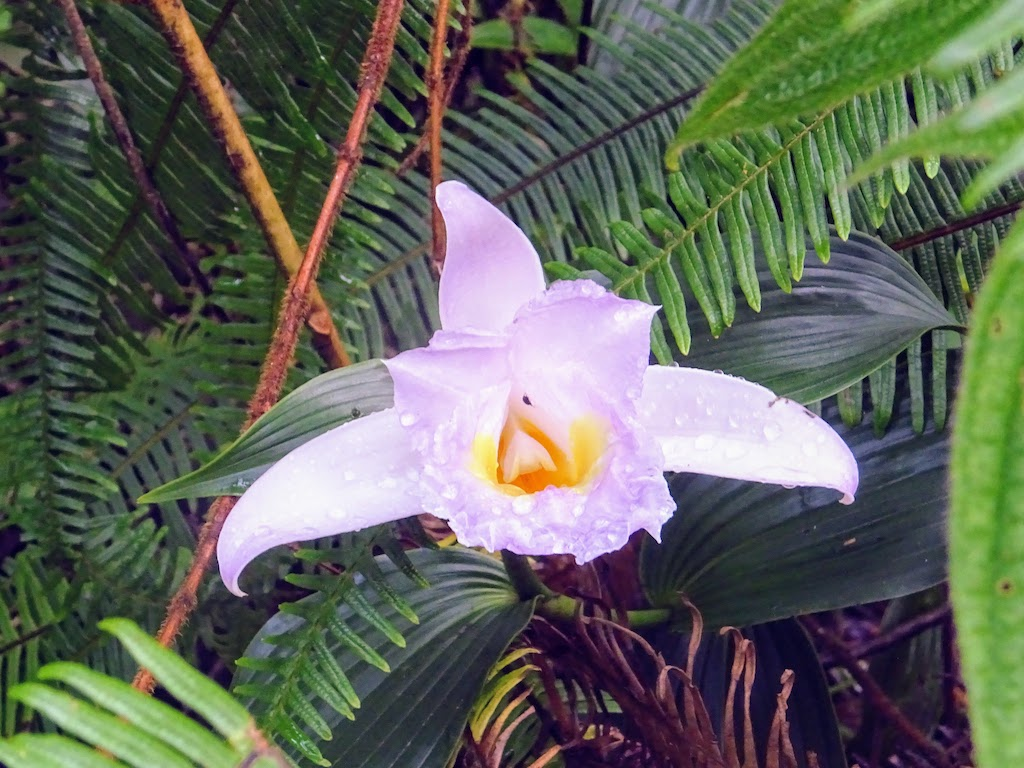 Costa Rica Arenal national park flower 3