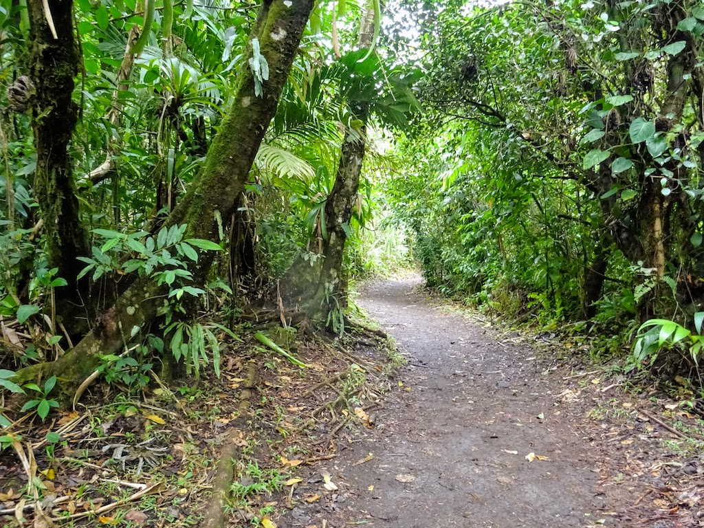 Costa Rica Arenal national park trail 1