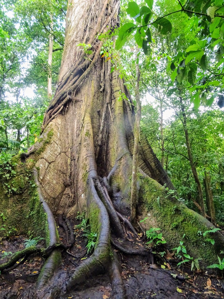 Costa Rica Arenal national park tree 1