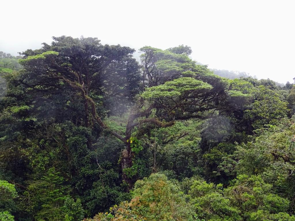 Costa Rica Monteverde forêt nuageuse 1