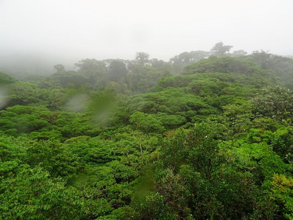 Costa Rica Monteverde forêt nuageuse