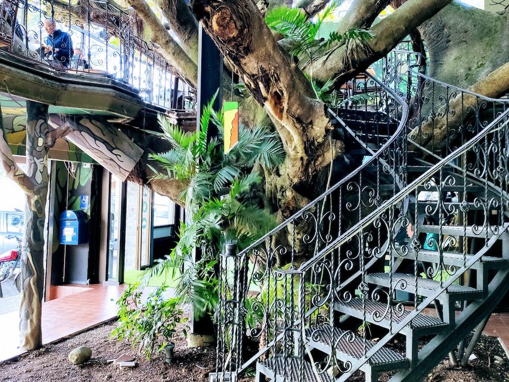 Costa Rica Monteverde San Elena maison arbre 1
