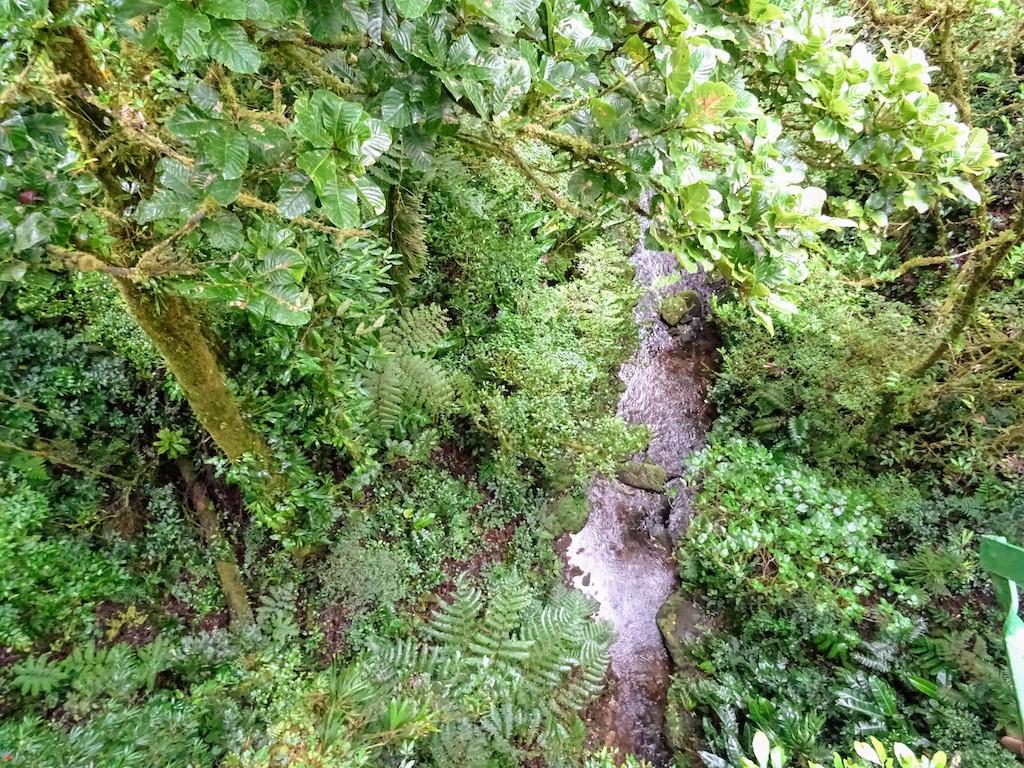 Costa Rica Monteverde Selvatura parc vue en bas