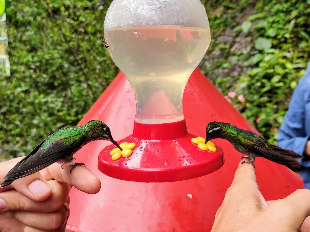 Costa Rica Monteverde colibris