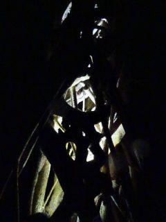 Costa Rica Monteverde promenade de nuit ficus