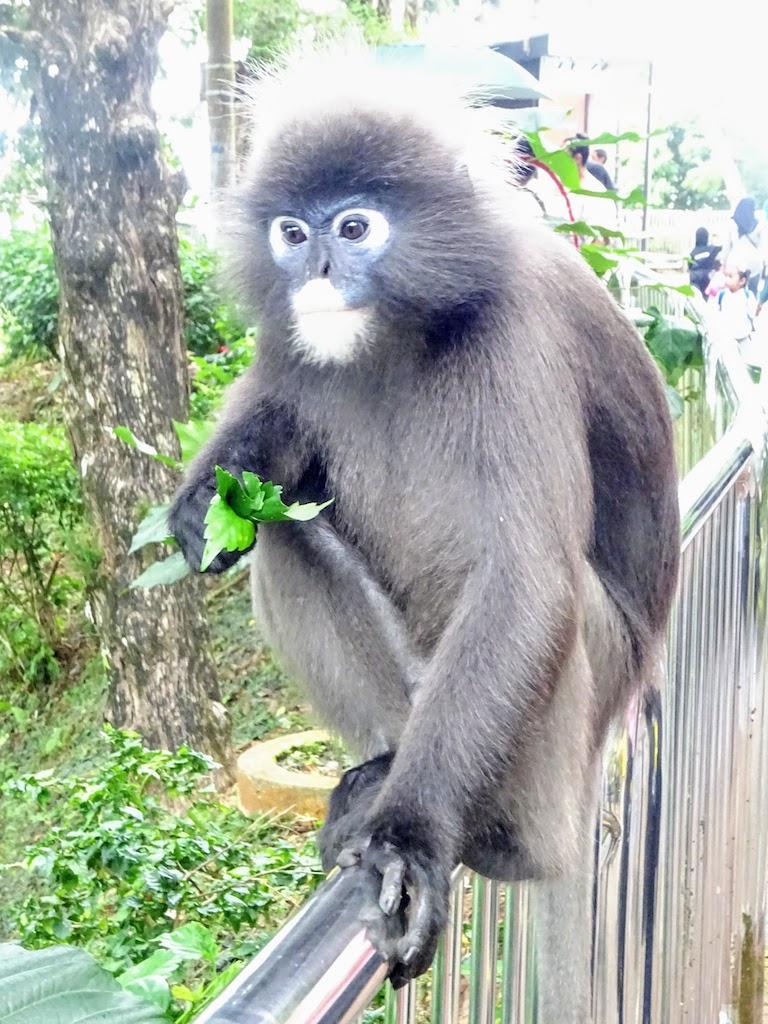 Malaisie Penang Hill singe