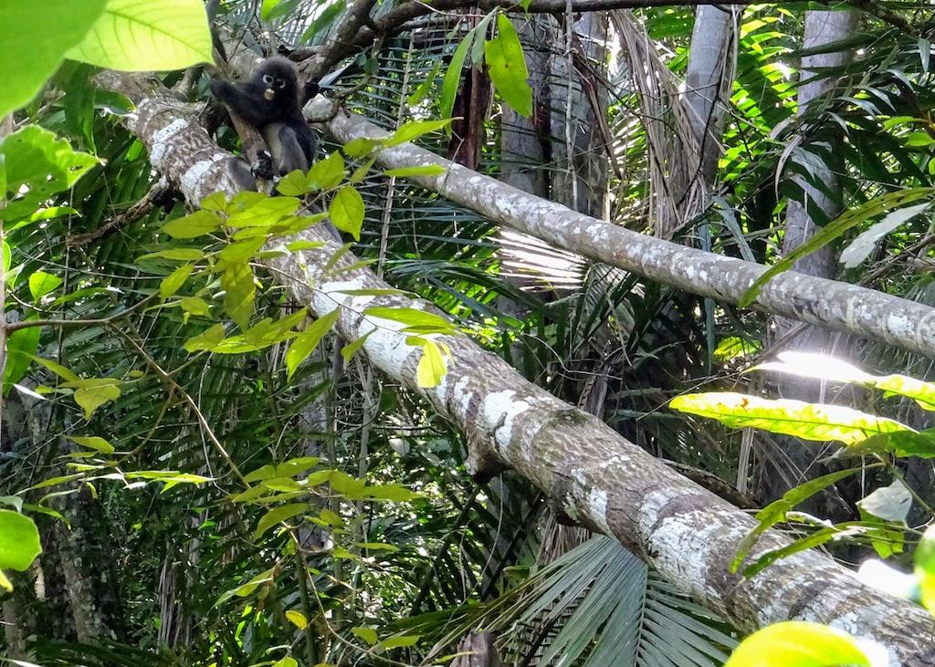 Malaysia Penang National park monkey